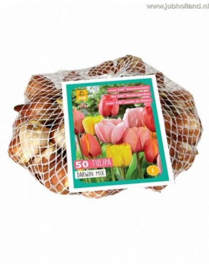 Tulipa 'Darwin' mix