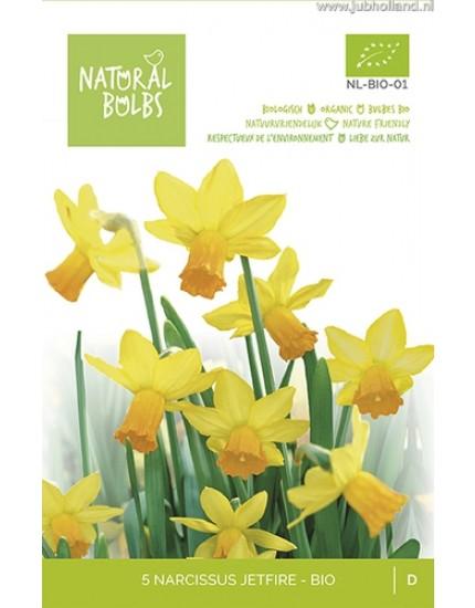 Narcissus 'Jetfire' biologisch