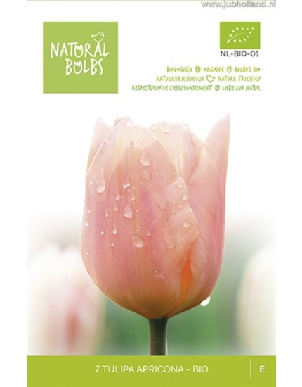 Tulipa 'Apricona' biologisch