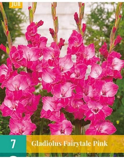 Gladiolus 'Fairytale Pink'