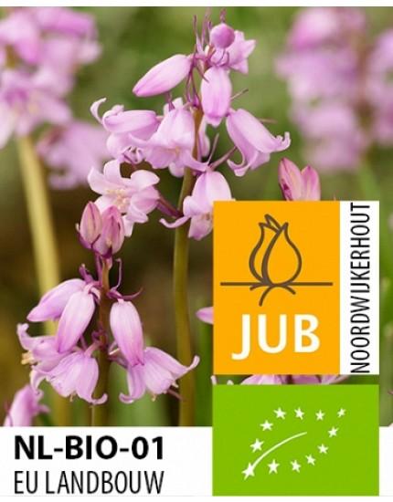 Hyacinthoides hispanica biologisch