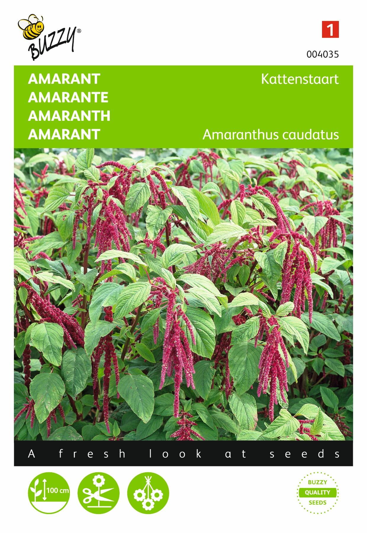Amaranthus caudatus rode bloementrossen