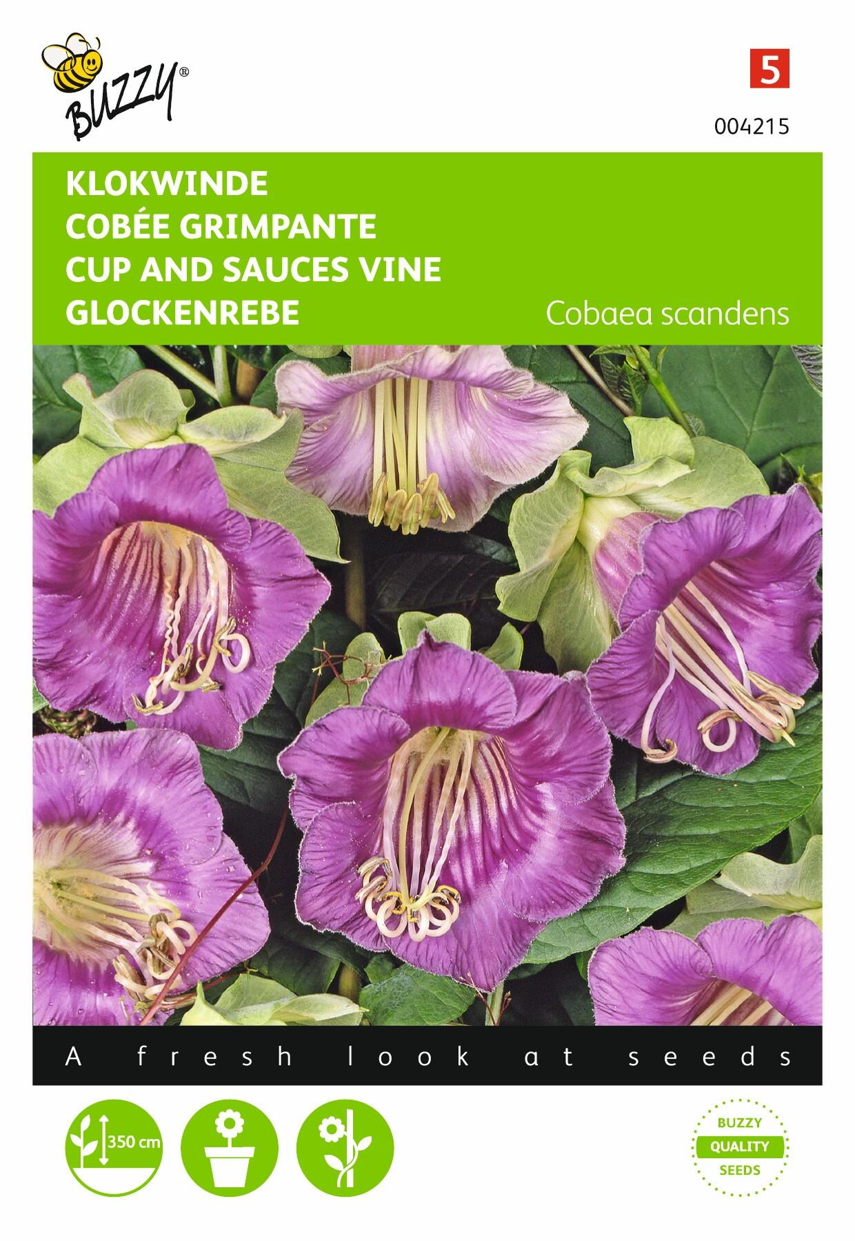 Cobaea scandens violetblauw