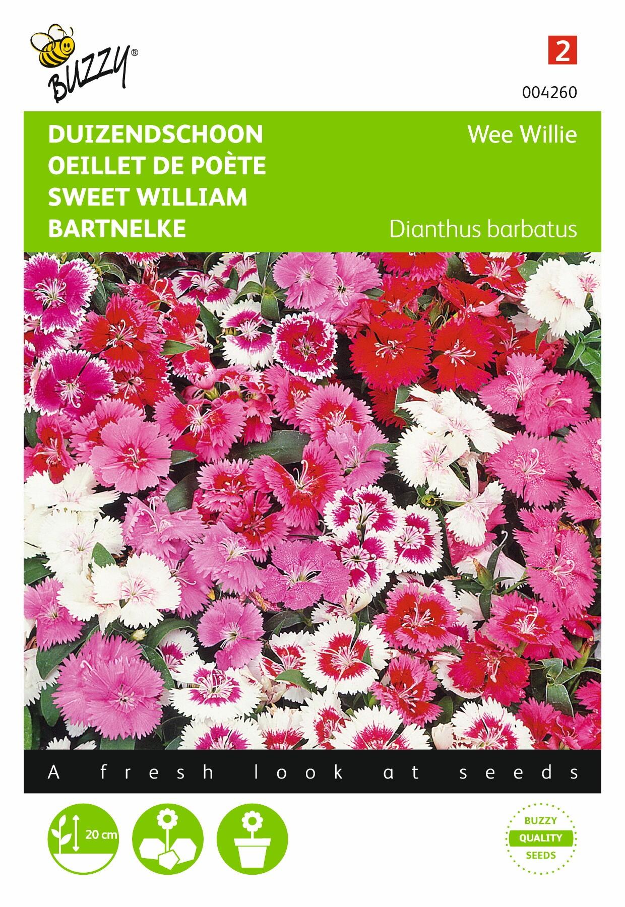 Dianthus barbatus Wee Willie gemengd