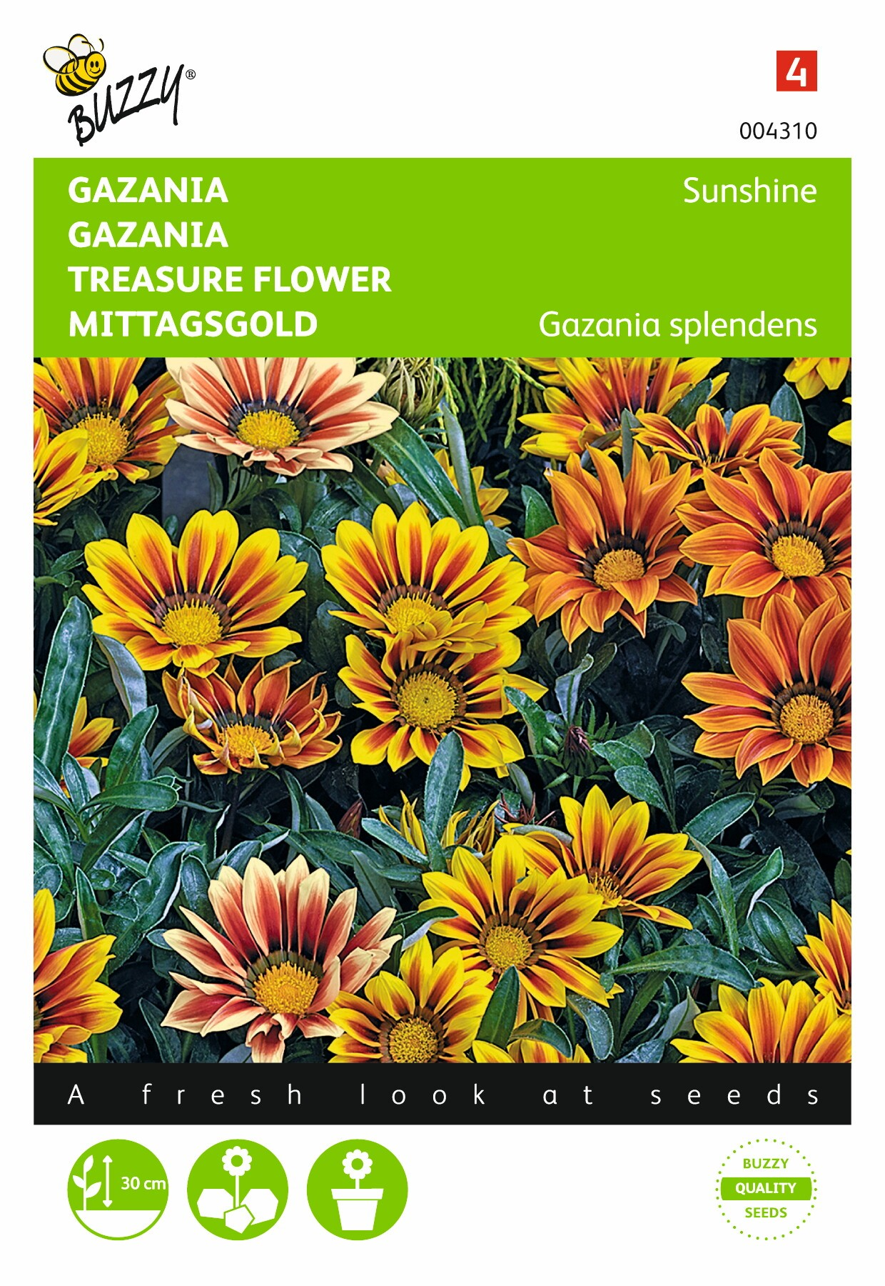 Gazania splendens hybrida Sunshine