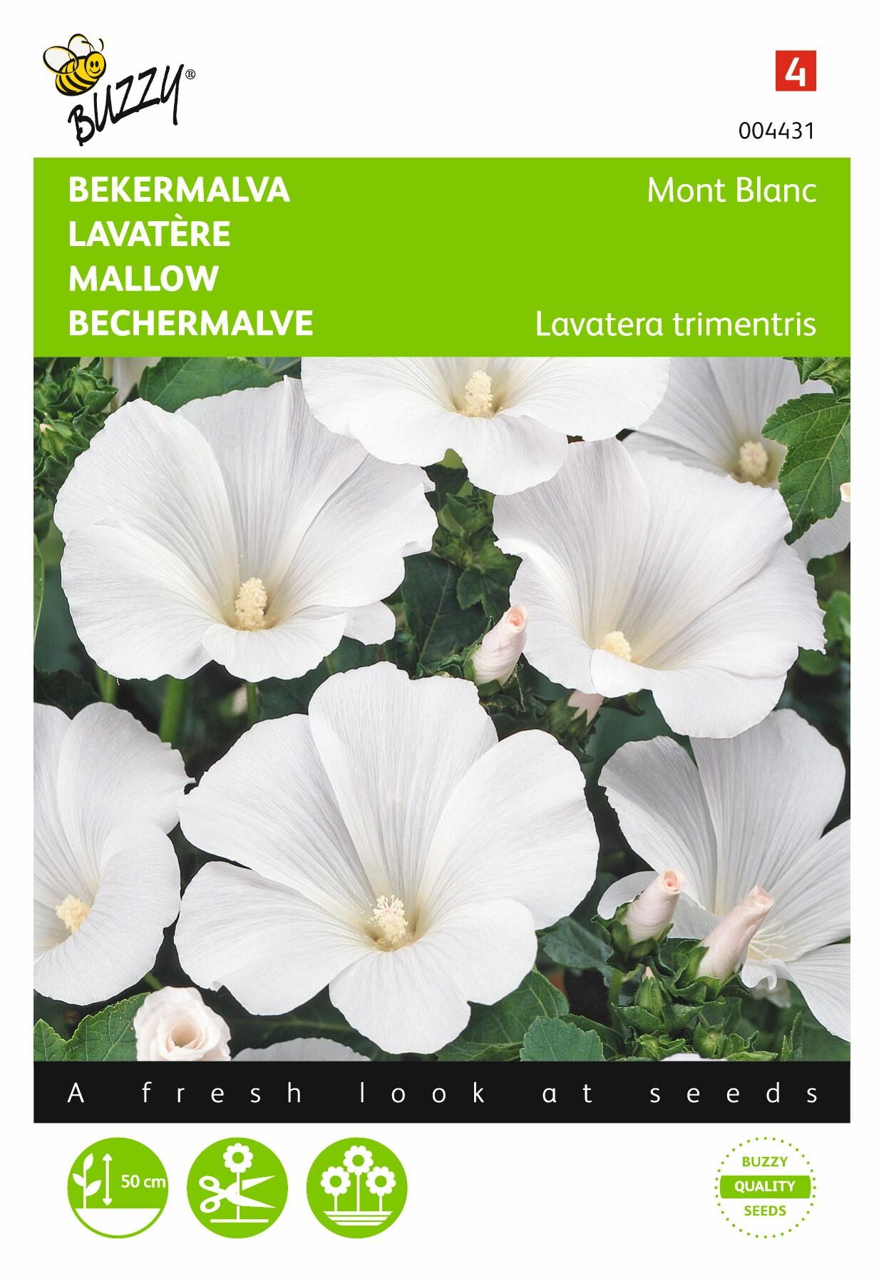 Lavatera trimestris Mont  Blanc wit