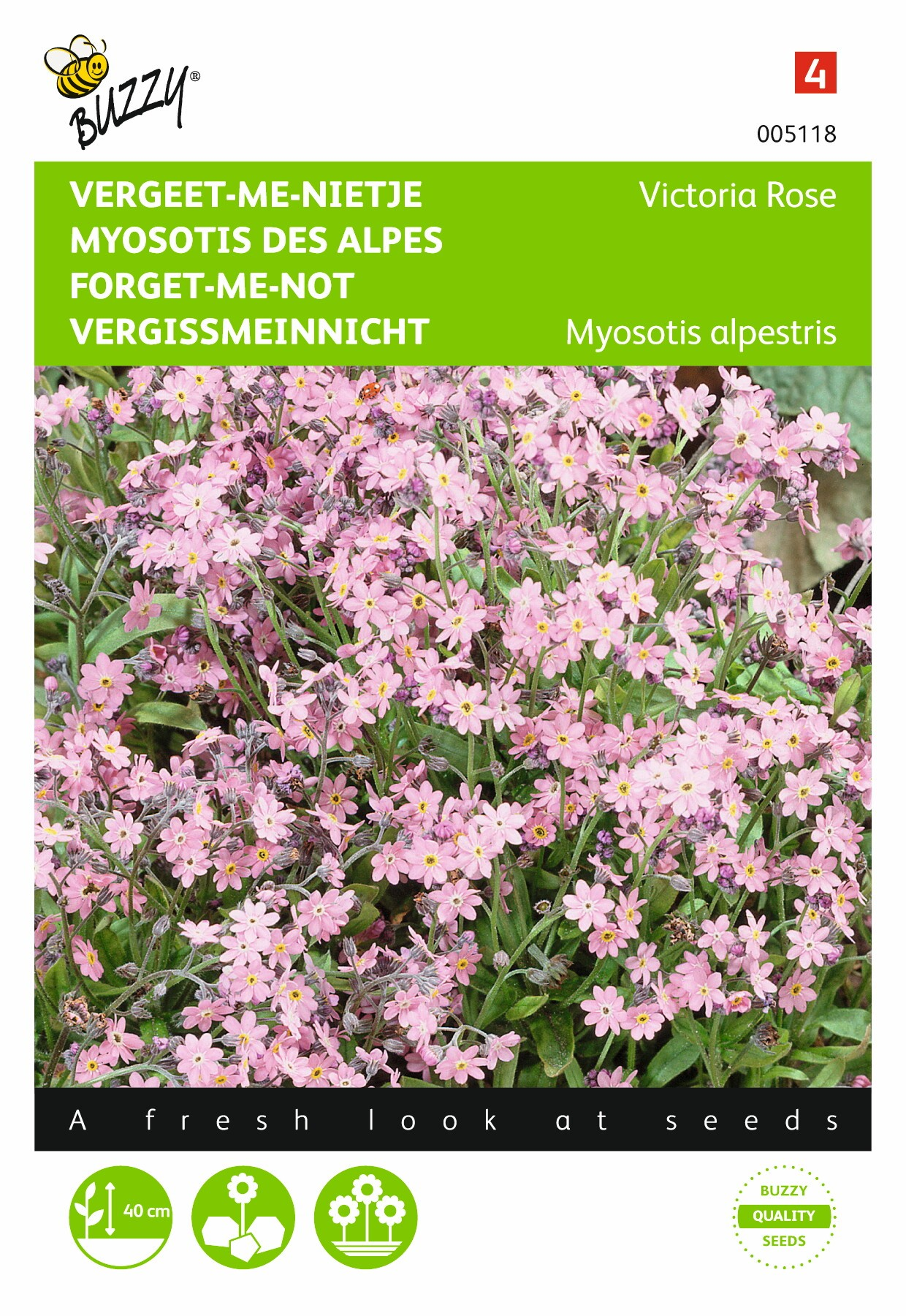 Myosotis alpenstris Victoria rose