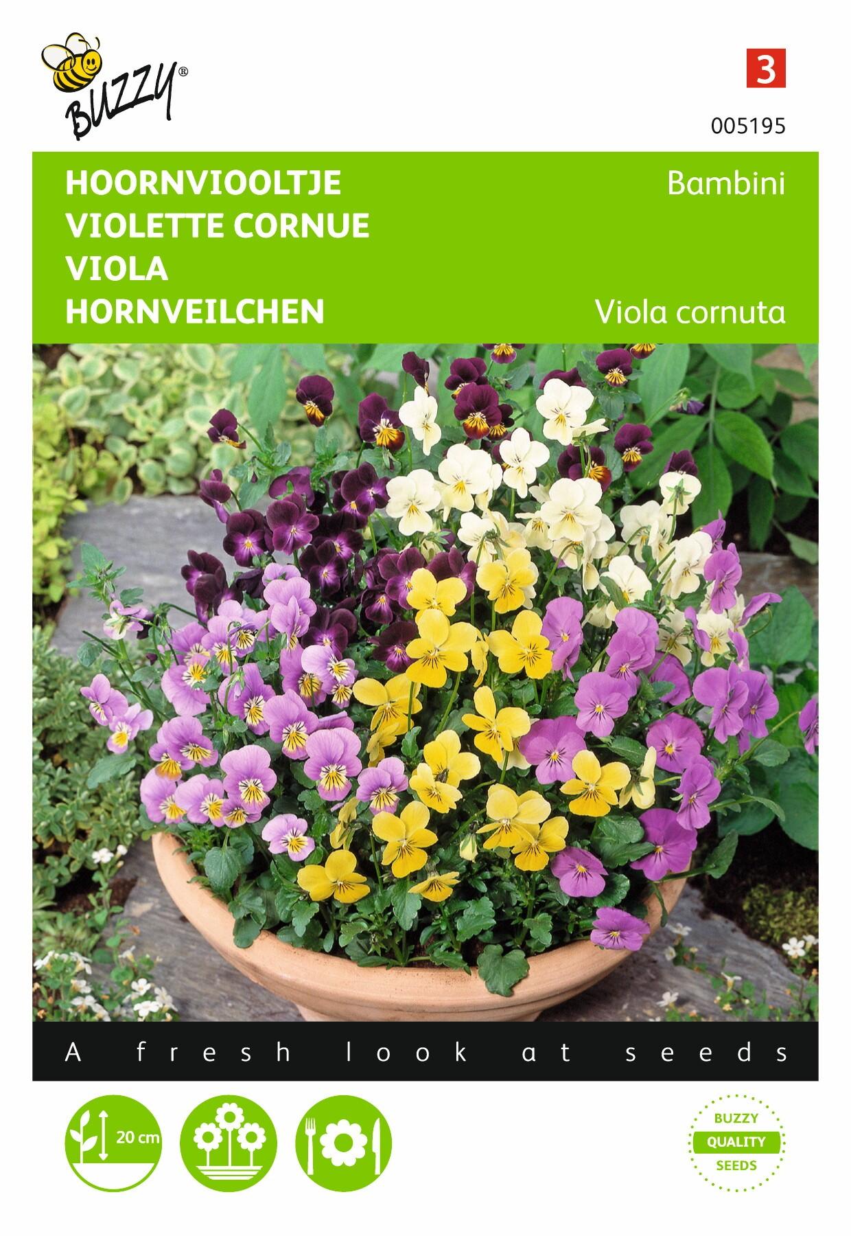 Viola cornuta Bambini gemengd