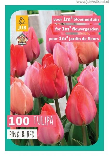 Tulipa Pink & Red mix