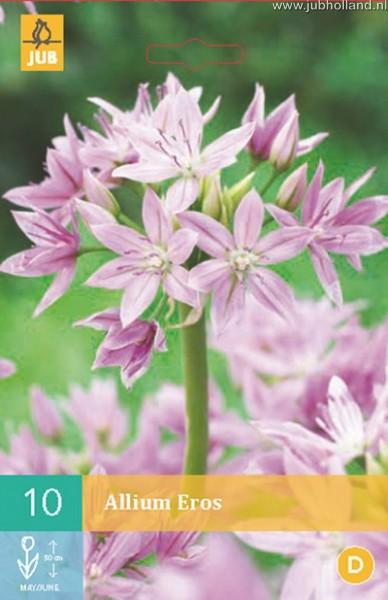 Allium 'Eros'