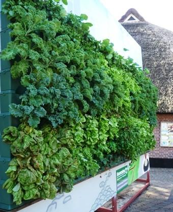 Minigarden groentewand