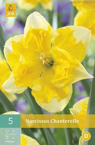 Narcissus 'Chanterelle'