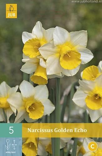 Narcissus 'Golden Echo'