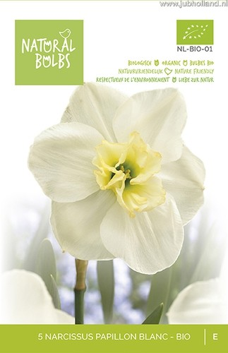 Narcissus 'Papillon Blanc' biologisch