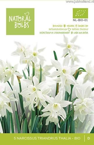 Narcissus triandrus 'Thalia' biologisch