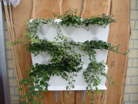 Minigarden Kamerplanten
