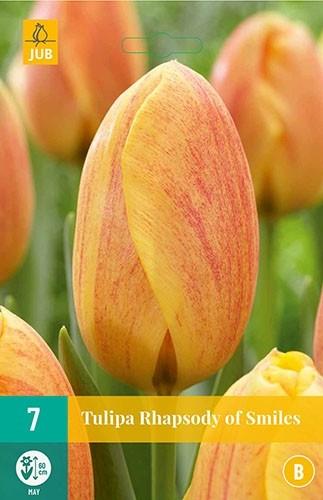 Tulipa 'Rhapsody of Smiles'