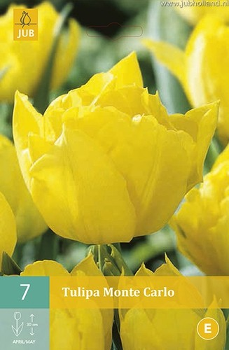 Tulipa 'Monte Carlo'