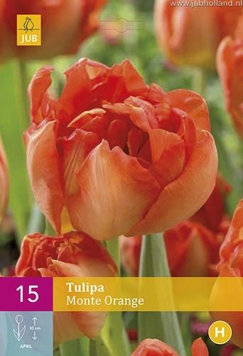 Tulipa 'Monte Orange'