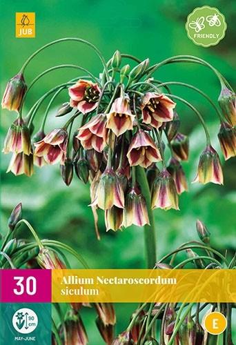 Allium (nectaroscordum) siculum