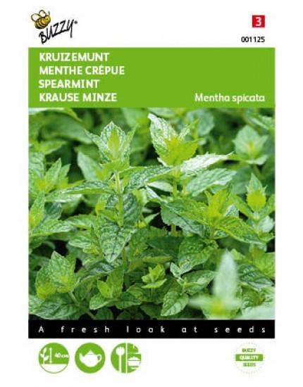 Mentha Spicata var. 'Crispata'