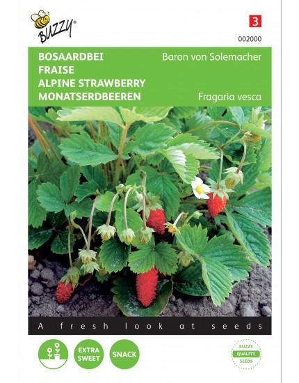 Aardbeien Baron van Solemacher