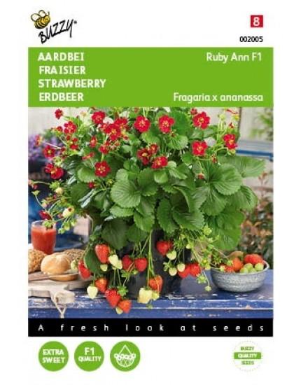 Aardbeien 'Ruby Ann F1'