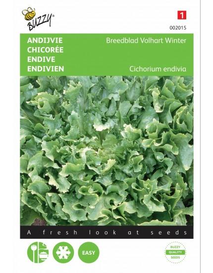 Andijvie 'Breedblad Volhart Winter'