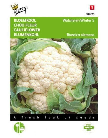 Bloemkool Walcheren Winter