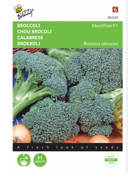 Broccoli Southern Comet F1