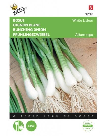 Bosui White Lisbon