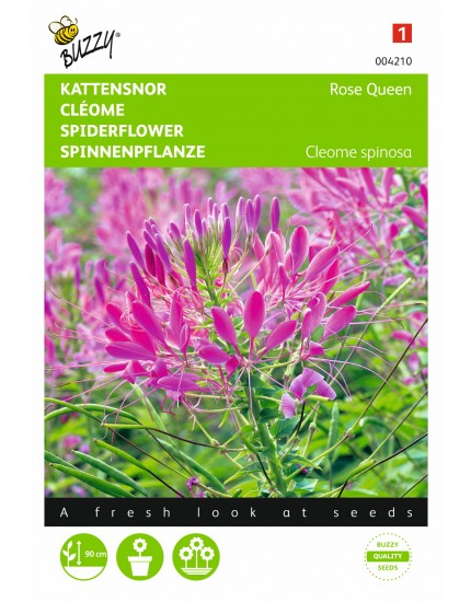 Cleome spinosa Rosa Queen