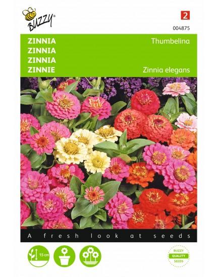 Zinnia elegans Thumbelina gemengd