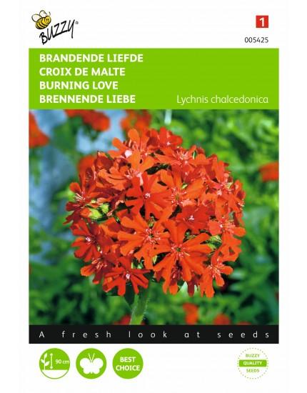 Lychnis chalcedonica schitterende rode kleur