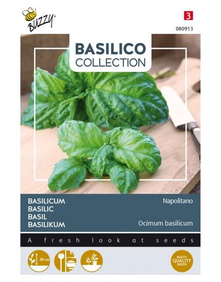 Basilicum 'Napolitano'