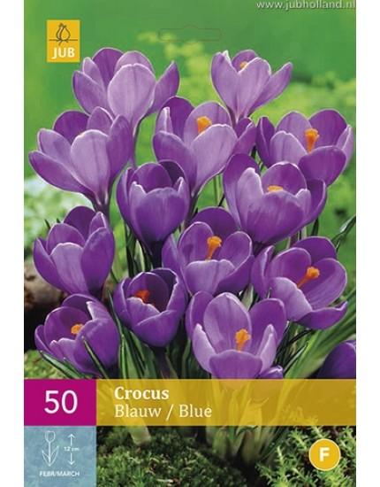 Crocus blauw