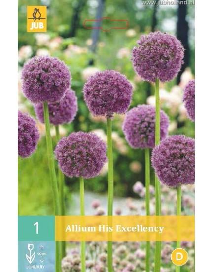 Allium 'His Excellency'