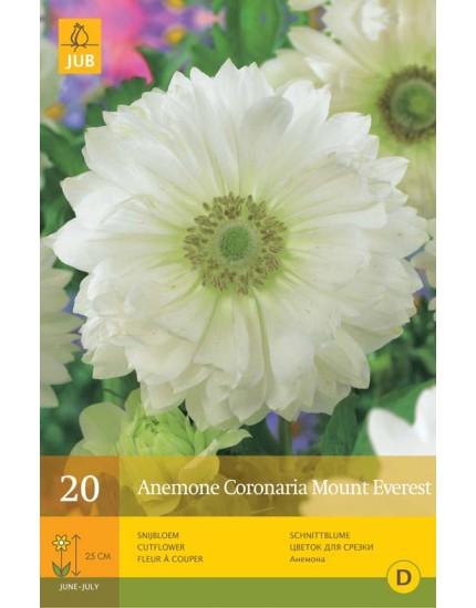 Anemone Coronaria Mount Everest