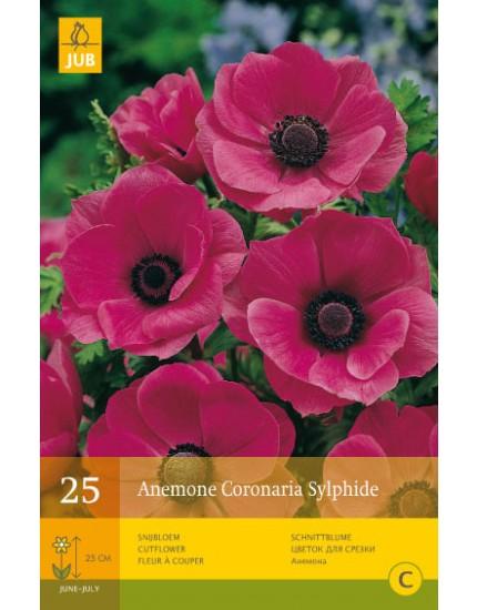 Anemone Coronaria Sylphide
