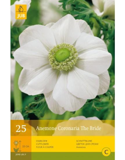 Anemone Coronaria The Bride
