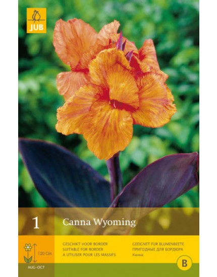 Canna Wyoming