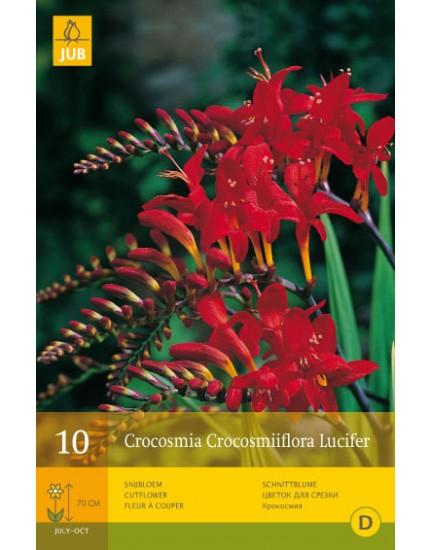 Crocosmia Crocosmiiflora Lucifer