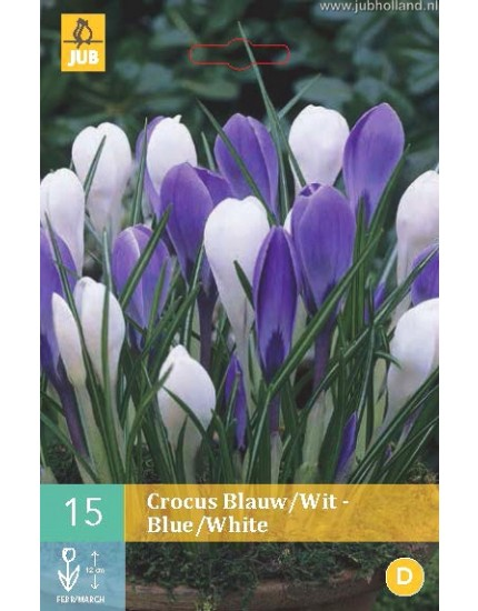 Crocus Blauw-Wit mix