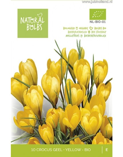 Crocus yellow biologisch