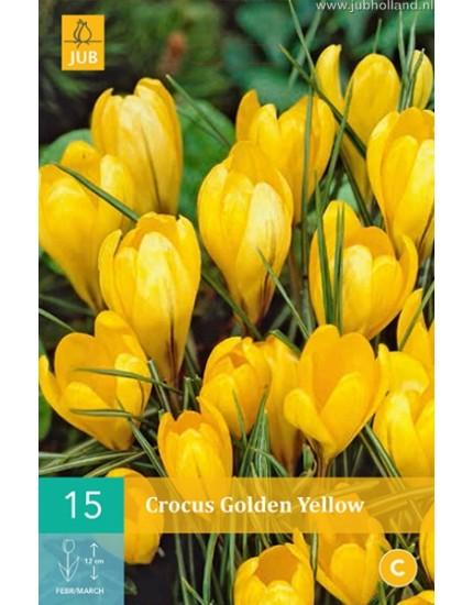 Crocus 'Golden Yellow'