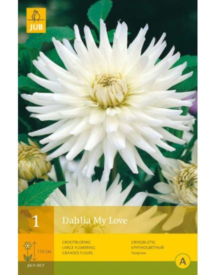 Dahlia 'My Love'