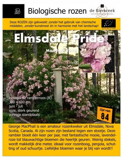 Rosa  'Elmsdale Pride'