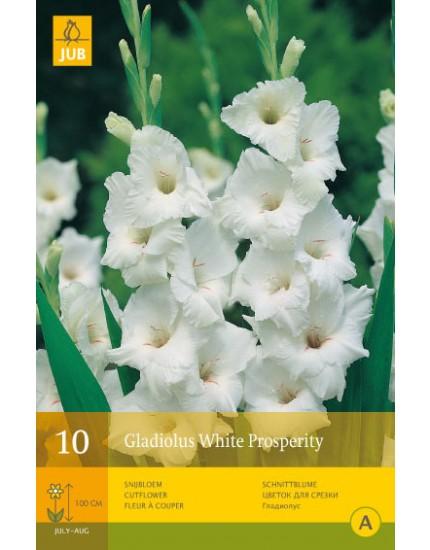 Gladiolus 'White Prosperity'