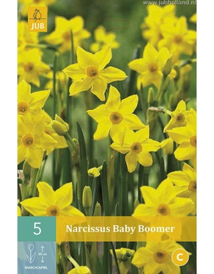 Narcissus 'Baby Boomer'