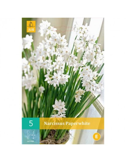 Narcissus 'Paperwhite'